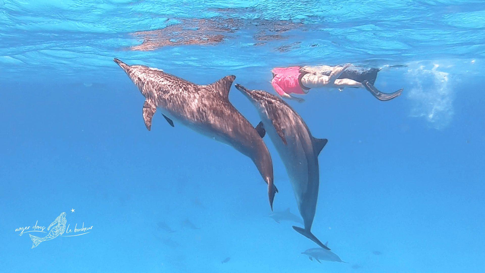 deux dauphins remontant à la surface avec plongeur en arrière-plan
